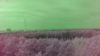 3_green_pass
